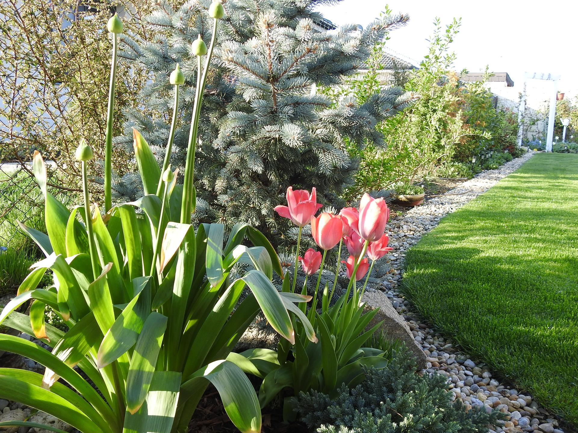 Máj v záhradke - Obrázok č. 47