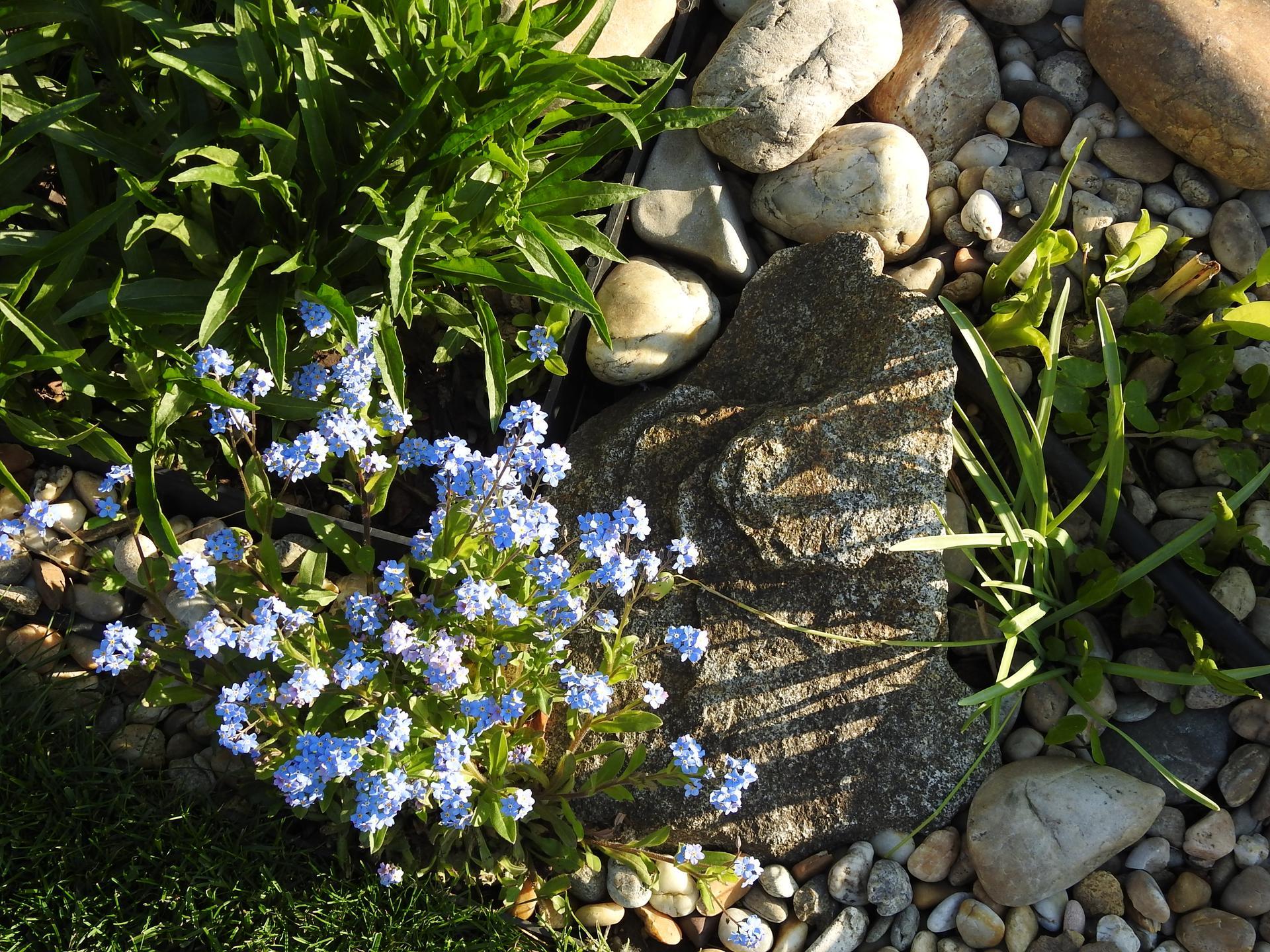Máj v záhradke - Obrázok č. 49