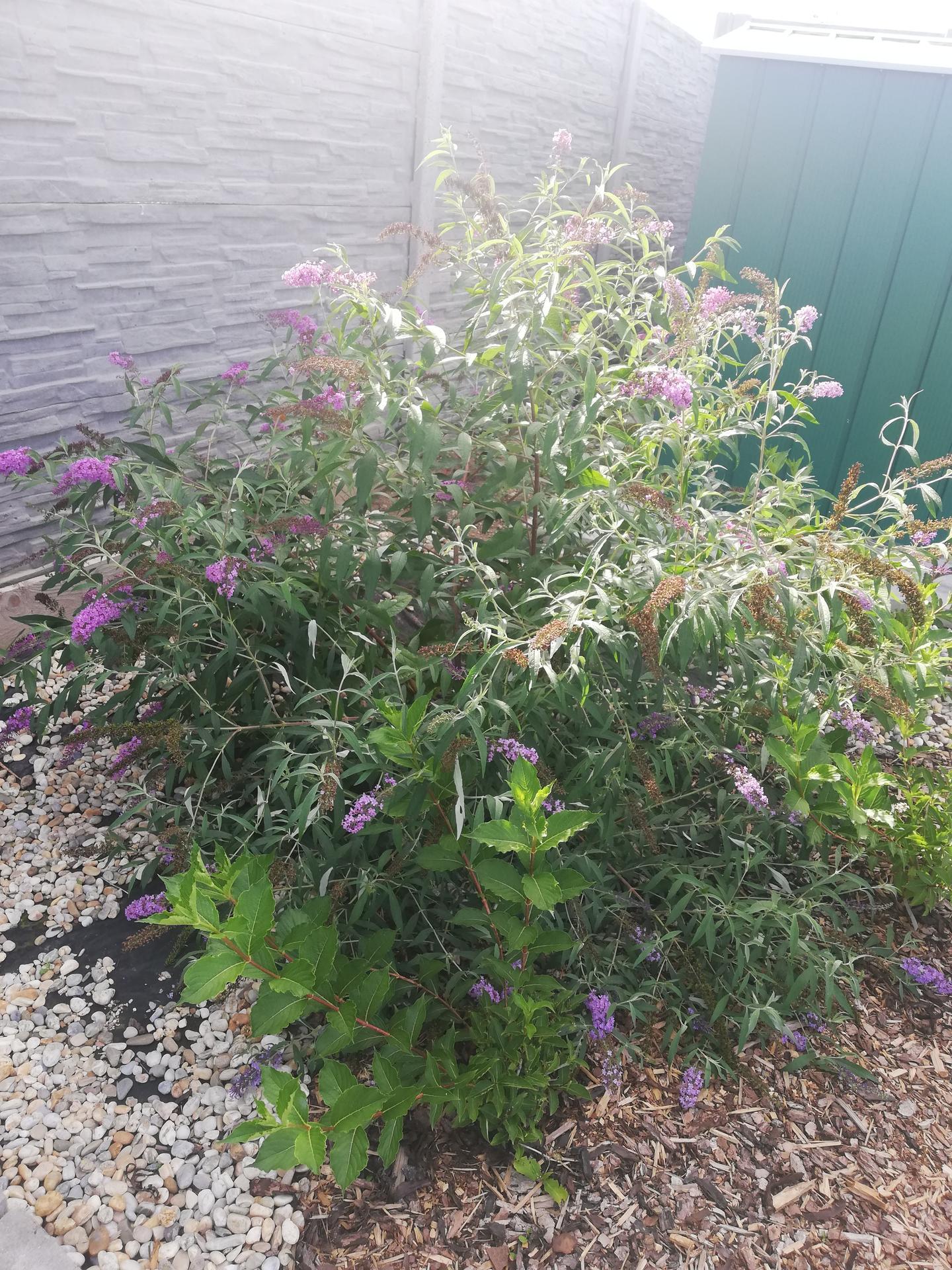 Záhrada - Obrázok č. 41
