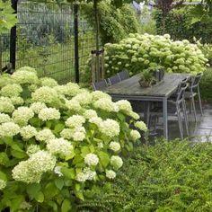 Inspiracie do mojej zahrady - Obrázok č. 10