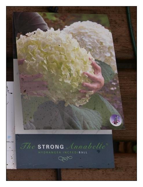 Vybrate do mojej buducej bielo zelenej zahrady - Obrázok č. 10