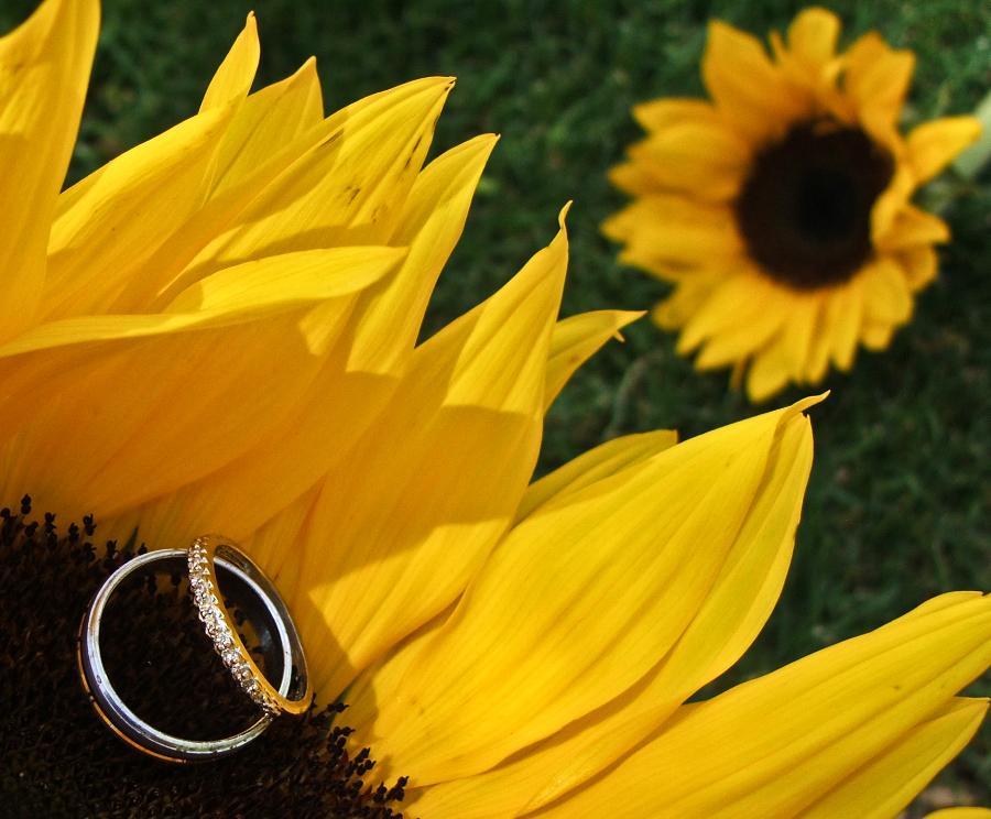 Sunflower wedding - Obrázok č. 10