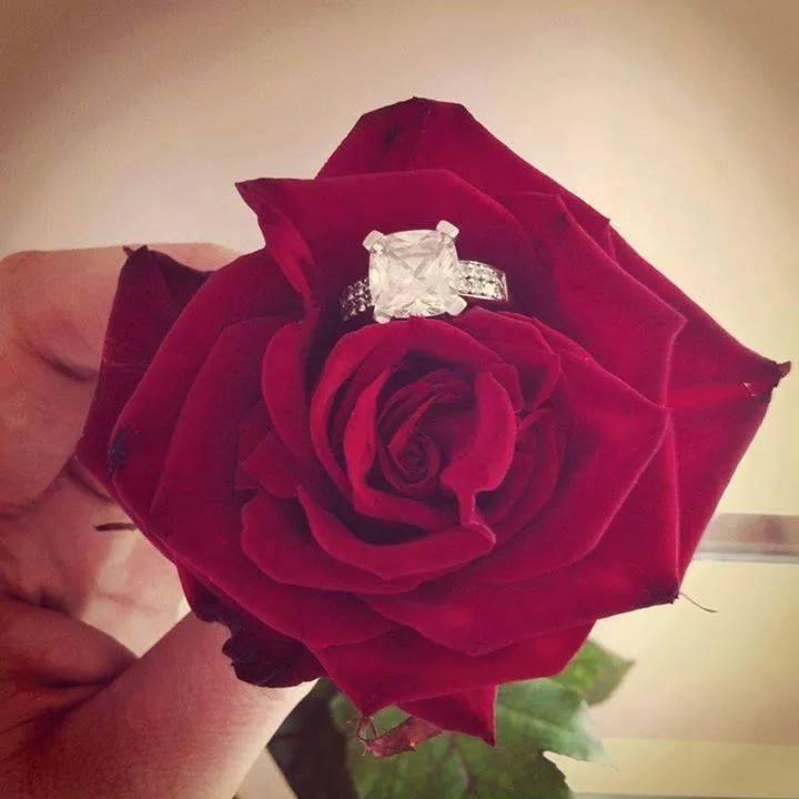 """Ruže v hlavnej úlohe @ } - , - """" - - Obrázok č. 232"""