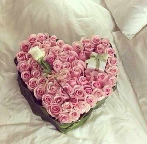 """Ruže v hlavnej úlohe @ } - , - """" - - Obrázok č. 233"""