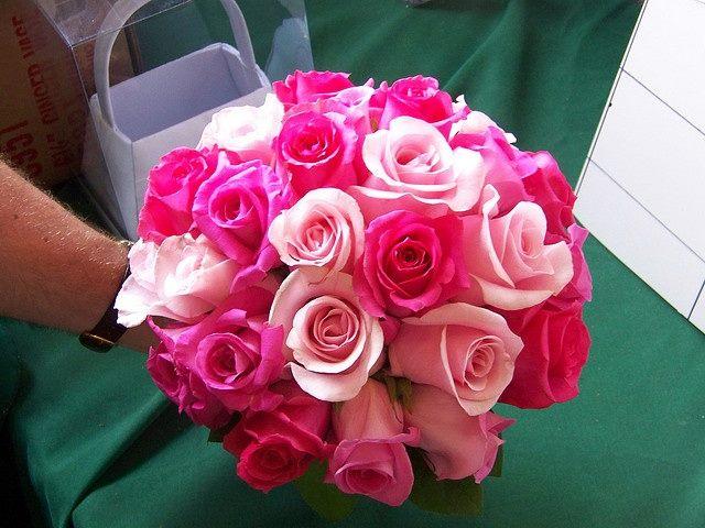 """Ruže v hlavnej úlohe @ } - , - """" - - Obrázok č. 241"""