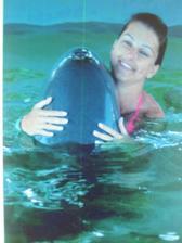 koupání s delfíny v Dominikánské republice