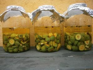 na sv. Jana jsem nasbírala ořechy a naložila je do čtyř litrů slivovice