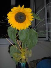 túto slnečnicu som dostala v pondelok k meninám .. krásna!