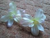 Kvetinky,