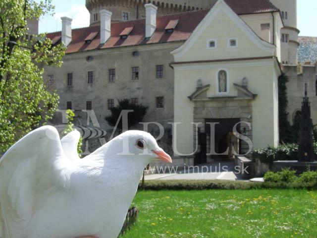 Náš veľký deň 19.9.2009 - ..holúbkovia...aké romantické...