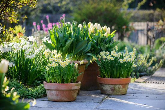 Pomalu přemýšlím, čím usadit venkovní květináče, aby to vydrželo, co plánujete na jaro? - Obrázek č. 1