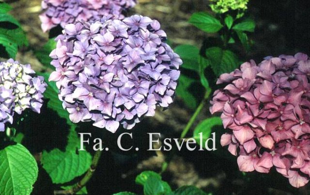 Kasia - Obrázok č. 13