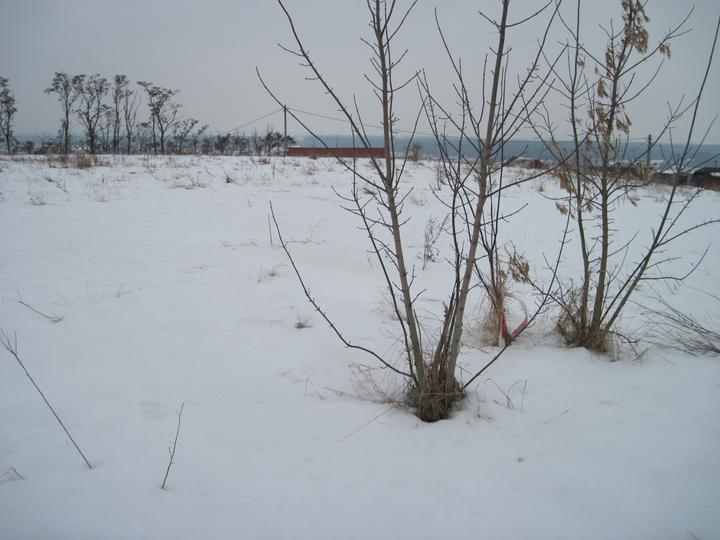 Zaciname stavet - nas pozemek v zime, neni nic videt