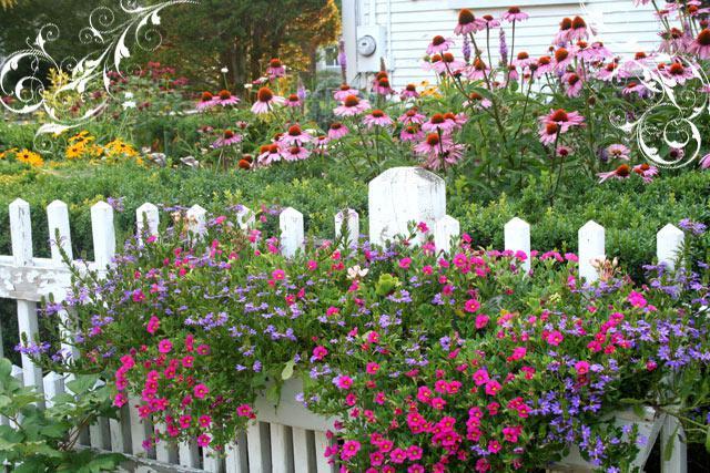 Život na záhrade - Obrázok č. 3
