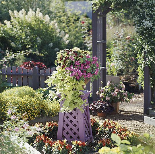 Život na záhrade - Obrázok č. 10