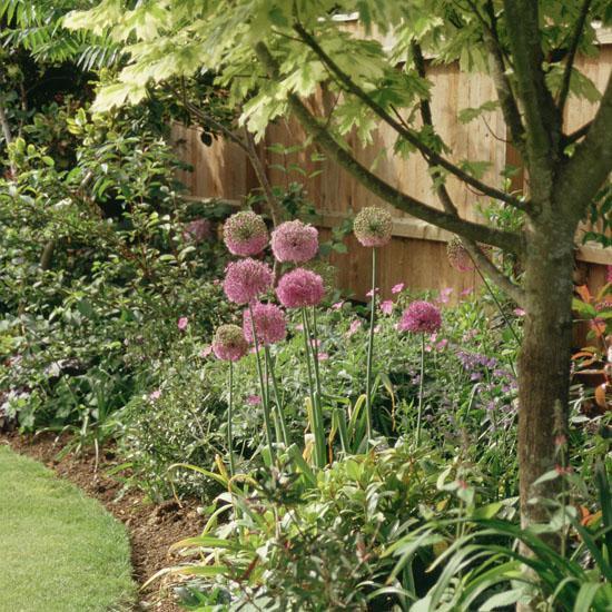 Život na záhrade - Obrázok č. 12