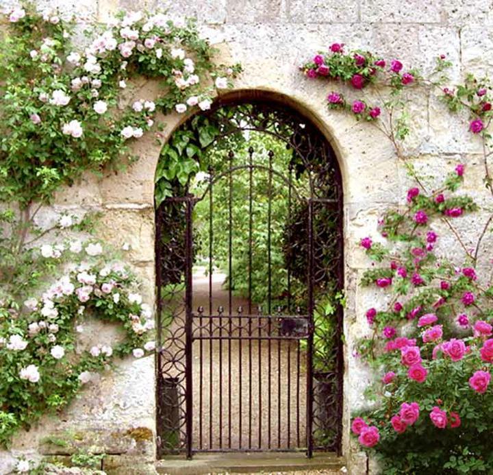 Život na záhrade - Obrázok č. 35