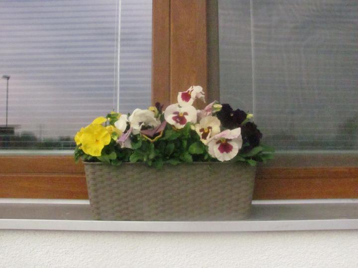 Fasáda + okna inspirace - Obrázek č. 64