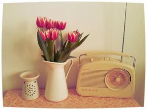 Moje první letošní tulipánky...