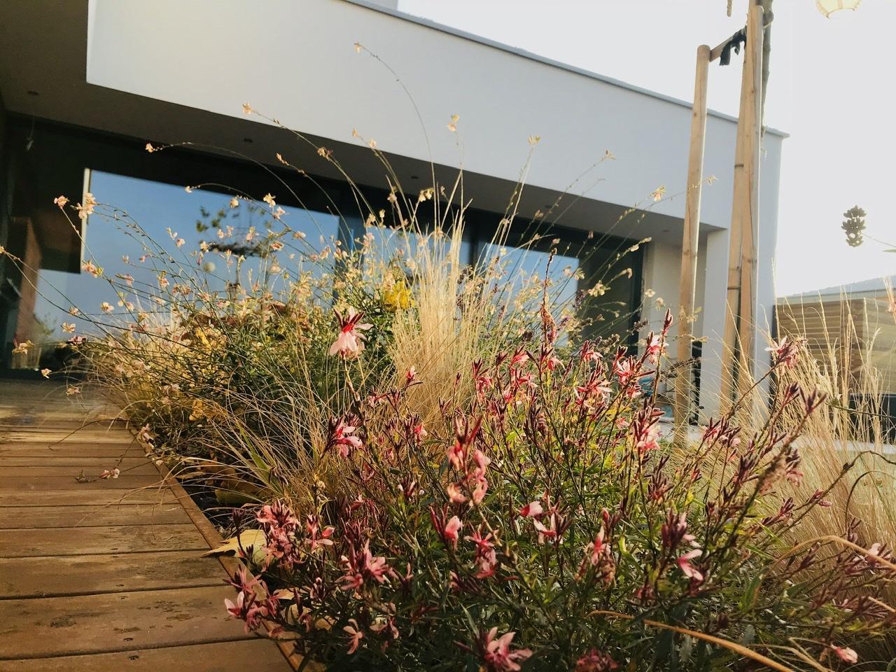 Naše L-ko začiatok 4. roku bývania - Dnešné krásné mrazivé ráno, vonku je -2 stupne a vytrvalé kvety na južnej strane v zovretí domu si kvitnú akoby nebol pomaly prosinec  :)