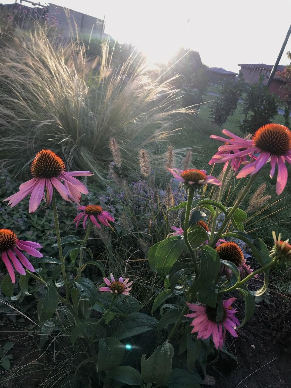 Naše L-ko začiatok 4. roku bývania - Dnešné krásné ráno - kvety si kvitnú akoby nebol pomaly prosinec  :)