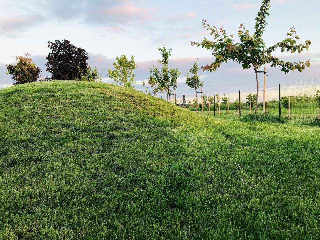 Naše L-ko - 2021 - stále dokončujeme - Ovocná ulička za kopčekom. U plotu je ulička bobulovin, ribizle červene, čierne, egreše. Za kopečekom su tu mladé ovocné stromčeky v stromoradí... Ovocná ulička bude mať další rok ešte vytvorený chodníček z nášlapov (odstrani sa travny drn a vysadia podokryvne rastlinky)