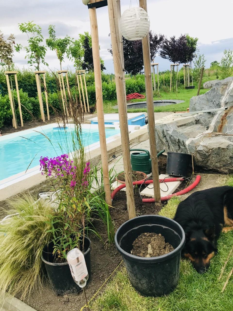 Naše L-ko - 2021 - stále dokončujeme - začínam s výsadbou okolo bazéna. Postupne, každý deň odstraňujem travný drn, prekyprím, zrovnám. Postupne začínam sadit rastlinky okolo vody.
