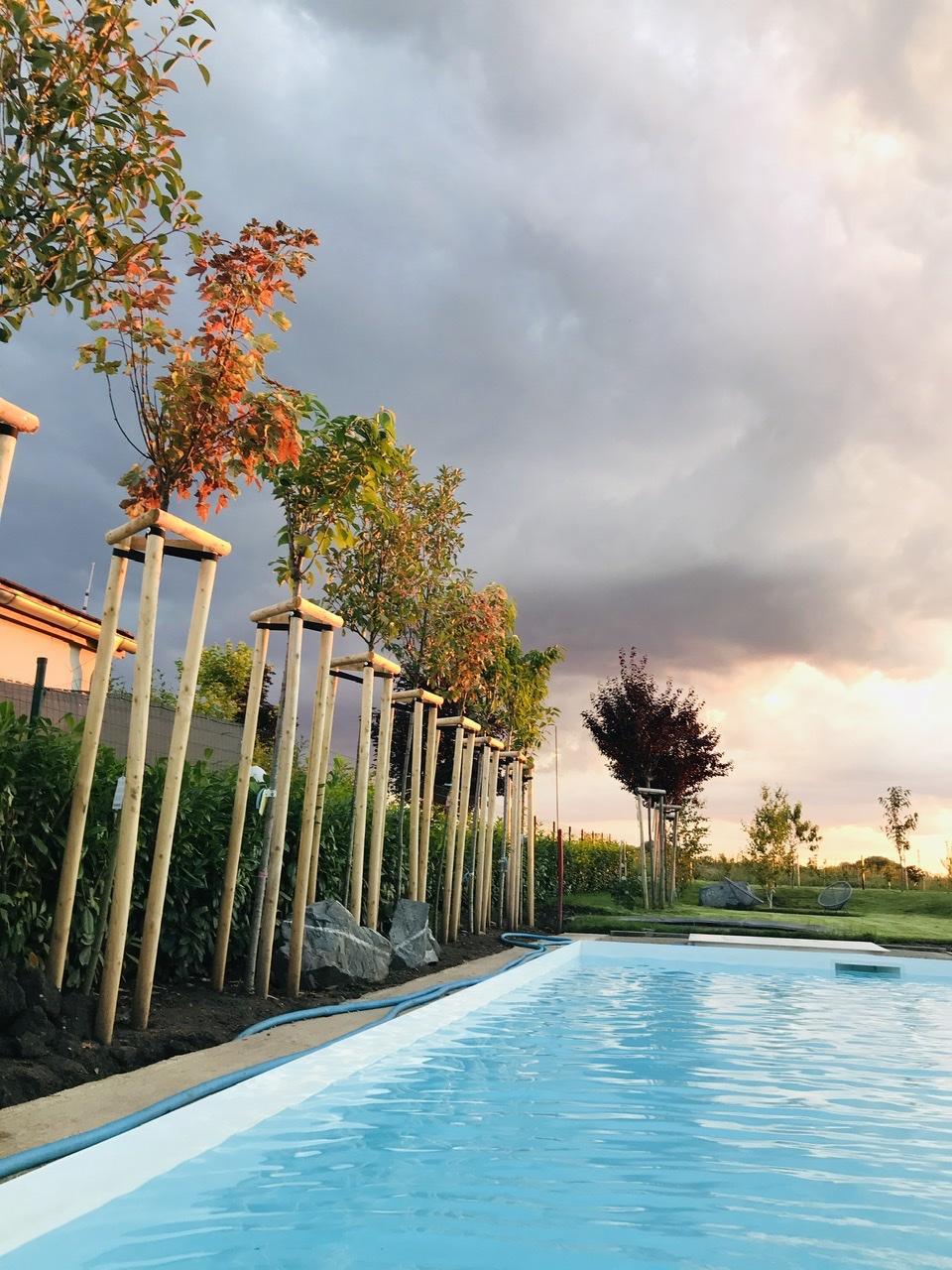 Naše L-ko - 2021 - stále dokončujeme - Mladé stromčeky pri vode v žiari západu slnka