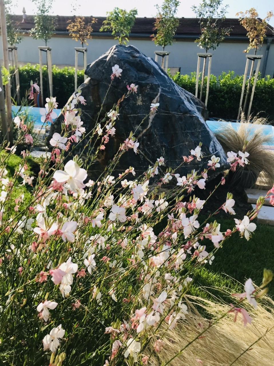 Naše L-ko - 2021 - stále dokončujeme - Biela gaura krásne kvitne
