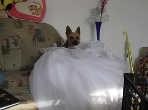 Maxíkovi se šaty taky líbily :-D