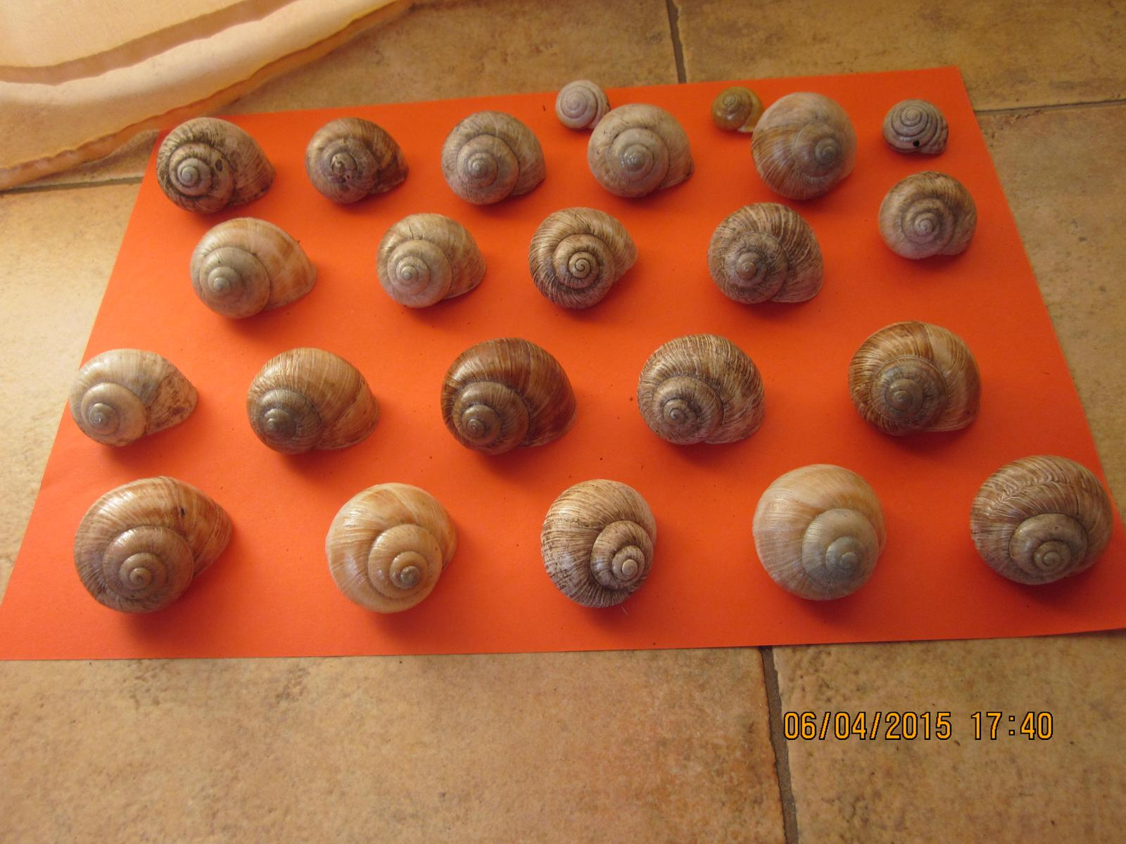 Slimáčia ulita cca 20 ks na dekoráciu do kvietkov  - Obrázok č. 1