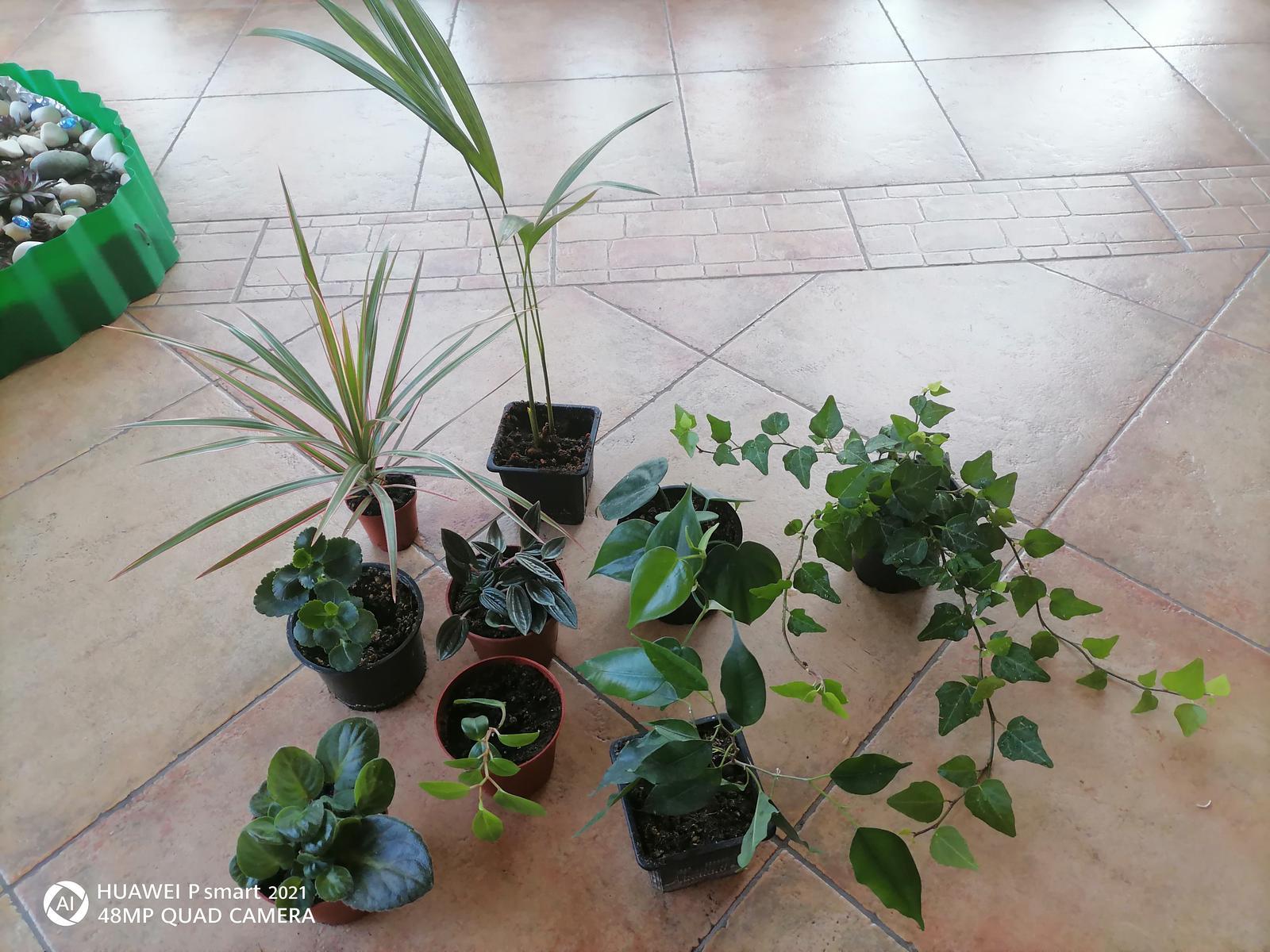 Izbové rastliny 9ks /mládniky zakorenené 1bal - Obrázok č. 1