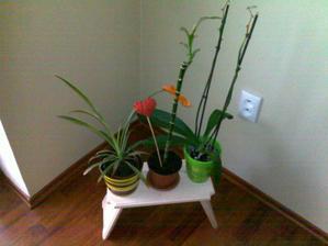 stolček od svokra - presádzala som už aj kvety :)