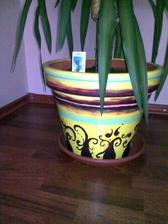 svagrinka nám pomalovala krásne kvetináč na našu yuku