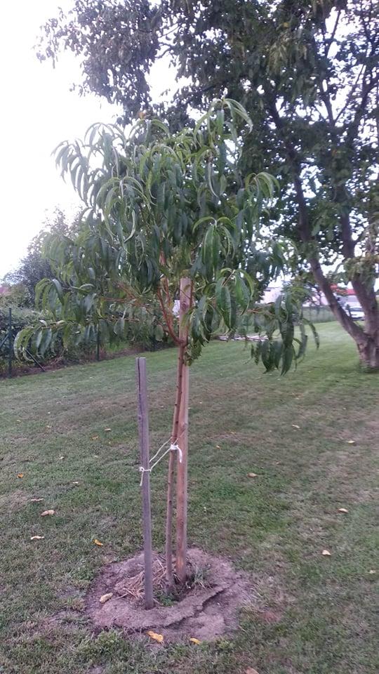 Niejake aktualne fotky. Stromy... - Obrázok č. 3