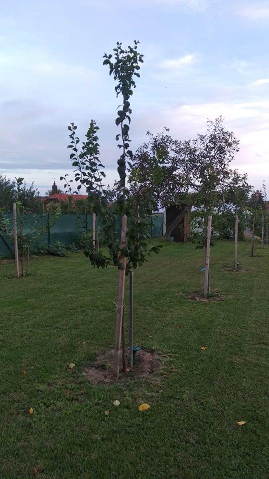 Niejake aktualne fotky. Stromy... - Obrázok č. 2