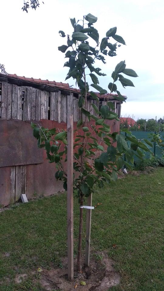 Niejake aktualne fotky. Stromy... - Obrázok č. 4