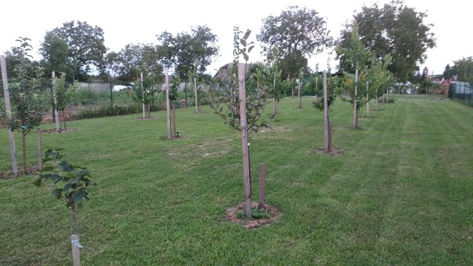 Niejake aktualne fotky. Stromy... - Obrázok č. 1