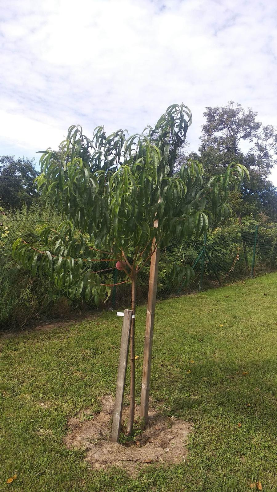 Plantex. odporucam krasne stromy,... - Obrázok č. 2