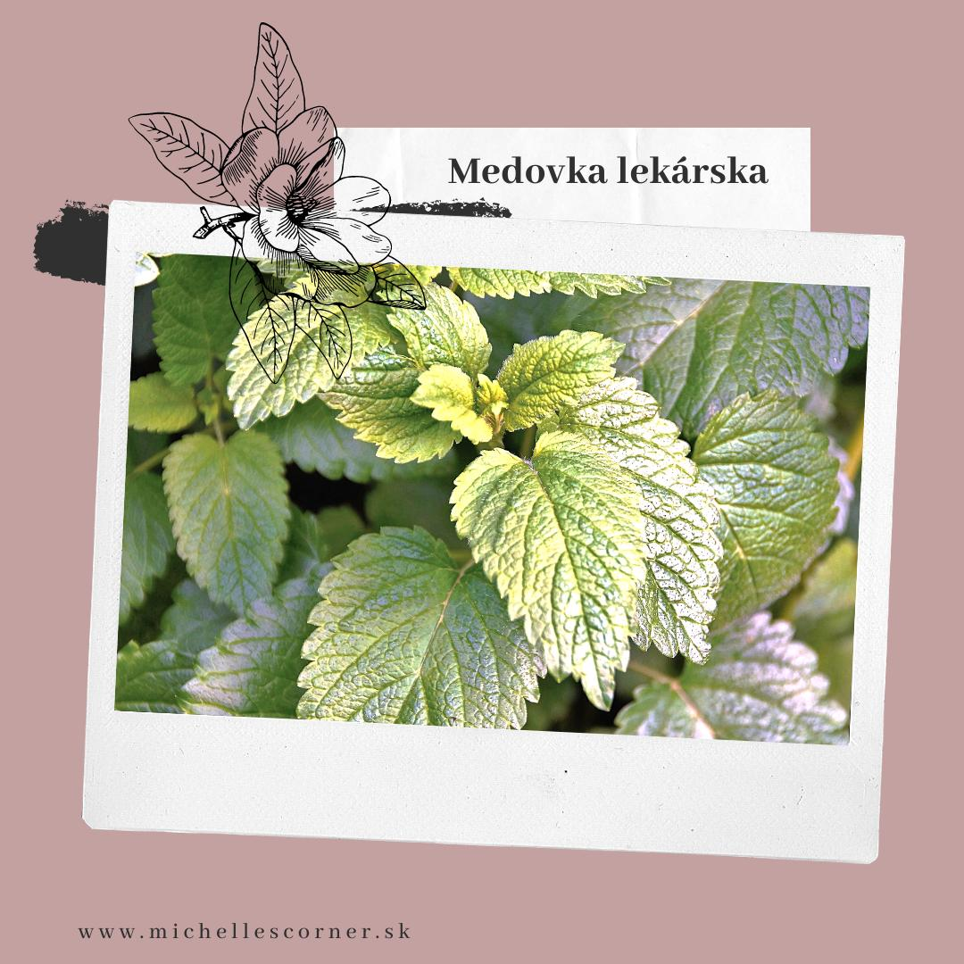 Můj mini herbář - Léčivé rostliny, které si zamiluješ :) - Meduňka lékařská - Latinsky: Mellissa officinalis