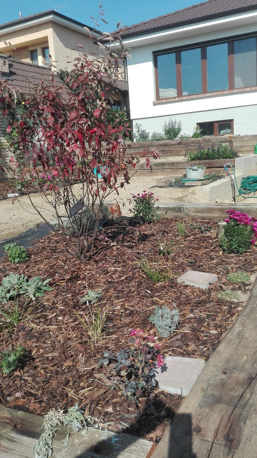 Názov stavby 3 - in da garden - muchovník krásne očervenal