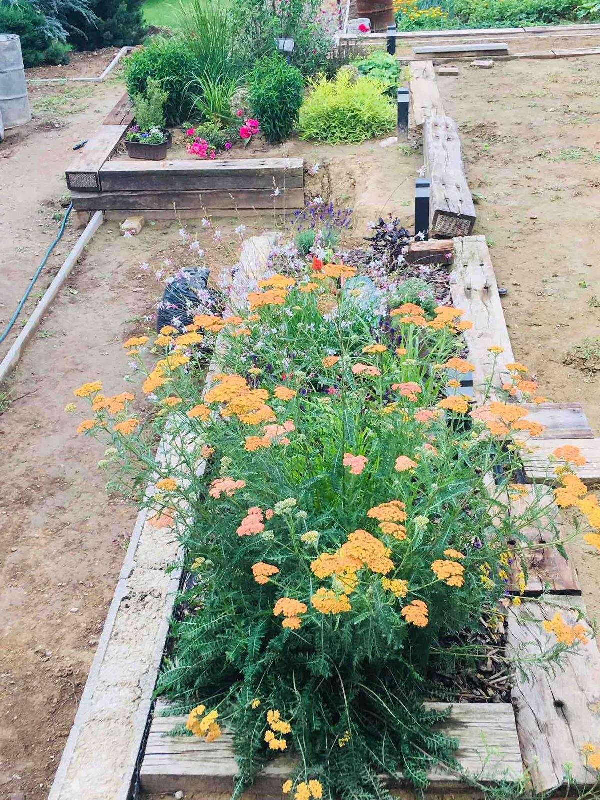 Názov stavby 3 - in da garden - tento krásavec z Polska mi robí radosť
