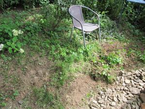 prababička přesadila keř a na mě čeká tráva