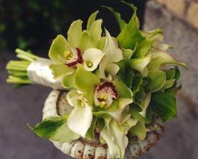 Taky krásné orchideje
