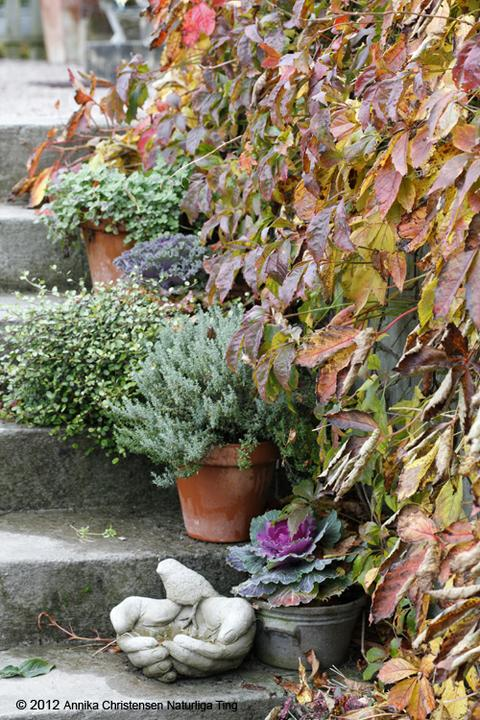 Krása divokej záhrady - Obrázok č. 149