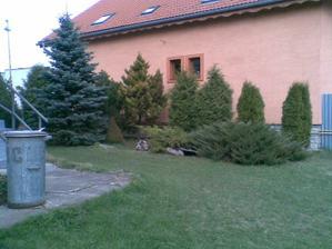 aspon kuusok krásnej zahradky,nám nechali predchádzajúci majitelia...