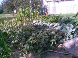 moja zááhradka..