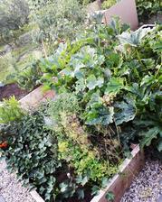 Dnes prídem po desiatich dňoch a táto džungľa ma čakala ....no zajtra mám čo robiť asi tak 6hodín v zahrade