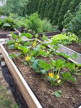 niekto už zberá úrodu, my ešte len kvety - posledné dva kusy záhonov musím ešte natrieť s lazurou a dorobiť chodníček