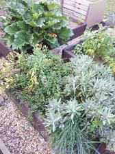 Bylinkovu zahradku pohltila salvia